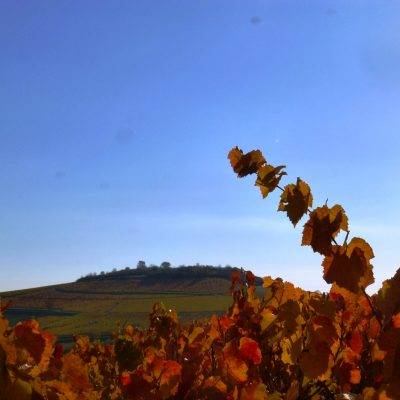 vue colline et automne Domaine Lacondemine