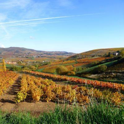 couleur automne vigne Domaine Lacondemine