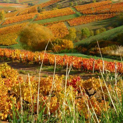 automne Domaine Lacondemine
