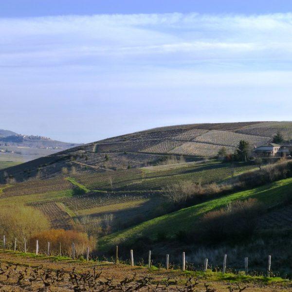 vue colline Domaine Lacondemine